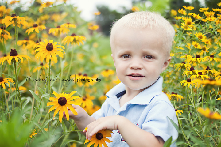 one year old portraits in a field of flowers
