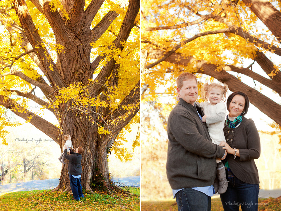 bright yellow leaves on a huge tree for fall pictures