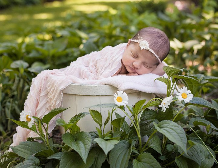 Fields of Flowers, Outdoor Newborn Photos in the Finger Lakes Region